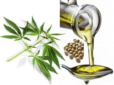 hemp-seed-oil1